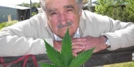 mujica-planta-de-maconha
