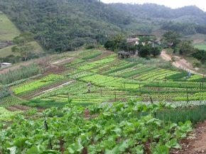 Temer corta mais de R$ 400 milhões da agricultura familiar para2017