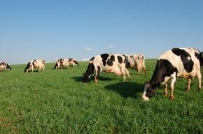 SARTORI PREJUDICA AGRICULTURA FAMILIAR AO REDUZIR IMPOSTO PARA INDUSTRIAS QUE IMPORTAMLEITE