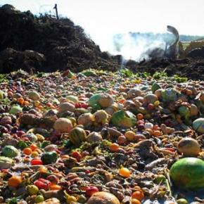 Desperdício de alimentos em um mundo comfome