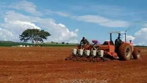 MST e MCP produzem safra recorde de milho crioulo no sudeste doGoiás