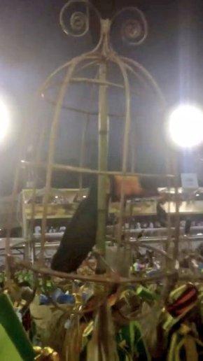 Só no carnaval da Tuiuti, tucano na gaiola ?? A verdade na avenida e a palhaçada nasinstituições??