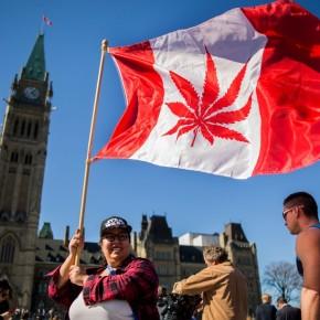 Canadá, o país onde a maconha está em falta após serlegalizada