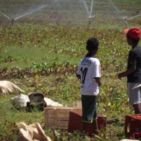 Capitalismo selvagem: Botar crianças para trabalhar no Brasil dá multa de …R$400,00