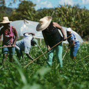 Ao acabar com o Conselho de Segurança Alimentar, Bolsonaro ataca a Agricultura Familiar e a Saúde dopovo