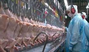 Efeito Bolsonaro: Frigorífico que vendia frango a árabes fecha e deixa milhares sem trabalho e semsalário