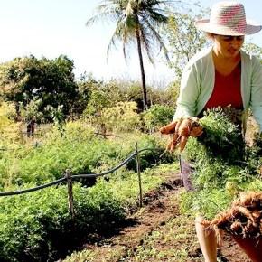Bolsonaro quer devolver terras desapropriadas pela Reforma Agraria para mega latifundiáriosimprodutivos