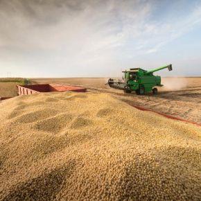 Soja gaúcho exportou 48% a menos no 1º Semestre. Exportações do Agro negócio também caem, diz Zero Hora nasentrelinhas