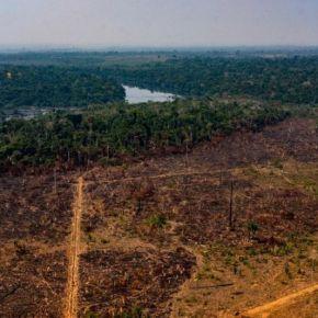 O que faz um processo de desmatamento da Amazônia demorar 28 anos para ter umasentença
