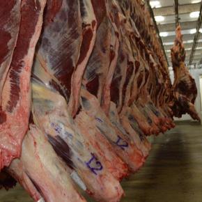 Absurdo: Brasil, um dos maiores produtor de petróleo e carne do mundo vai importar …carne, gasolina, diesel egás
