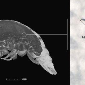 """Chocante: """"DNA humano"""" é encontrado em anfípode a mais de 7 mil metros de profundidade nooceano"""