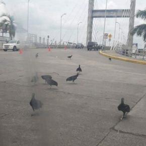 Corpos nas ruas e nas casas, urubus entre mortos: o Equador pode ser o Brasil amanhã (Por Murilo Matias)vídeo