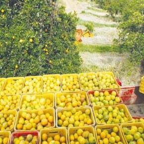 Próximos da escravidão: Suíços  denunciam ao mundo a situação precária dos colhedores de laranjas noBrasil