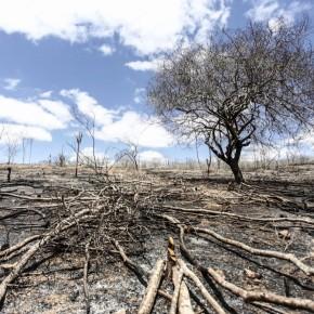 """Assustador: """"Estamos assistindo toda uma desconstrução da política ambiental"""", dizPaim"""