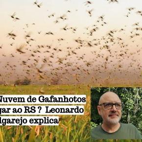 PODCAST: Nuvem de Gafanhotos pode chegar ao RS? Leonardo Melgarejo Explica. Clique eouça!