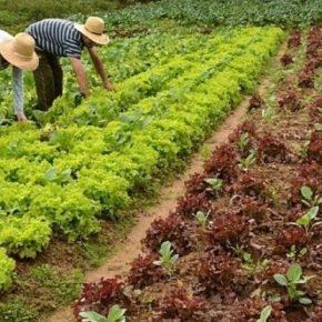 Por iniciativa do PT, Câmara aprova benefício emergencial aos agricultores familiares efeirantes