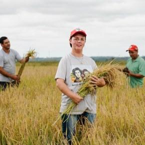 MST vende arroz barato e reafirma seu papel estratégico no combate àfome