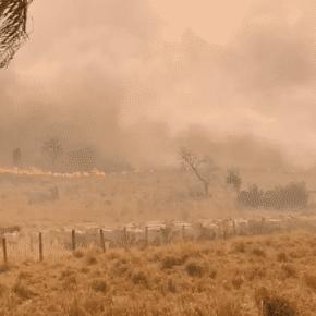 'Boi Bombeiro' é só mais uma das burrices do gado bozonazista