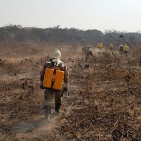 Empresa ligada a BTG Pactual e André Esteves foi quem mais devastou Pantanal, segundoIbama
