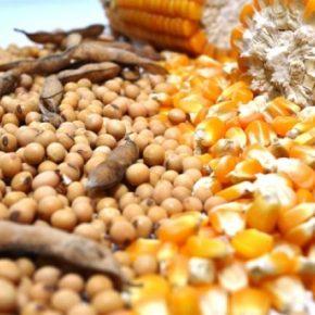 Por que o Óleo de Soja e Milho estão caros, se Brasil é maior produtor mundial? É treta contra opovo!