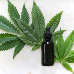 Primeira substância à base de cannabis  é aprovada emPortugal