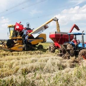 Maior Produtor de Arroz Agroecológico da América  Latina, MST projeta safra de 12,4 mil toneladas nos assentamentos doRS