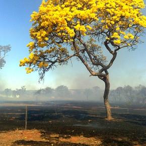 Uma primavera silenciosa para o Brasil (Por PauloPaim)