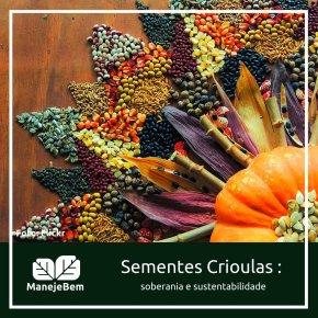 Sementes crioulas, sementes da paixão (Por SelvinoHeck)